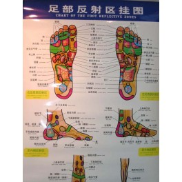 Chart of the foot reflective zones