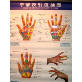 Chart of the hand reflective zones